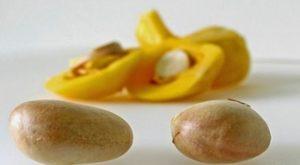 5 Ragam Manfaat Biji Nangka Bagi Kesehatan Tubuh
