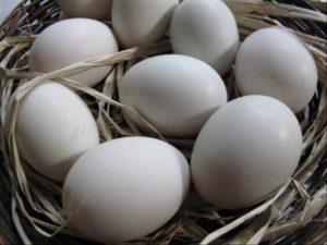 7  Manfaat Telur Angsa Untuk Kesehatan Dan Kecantikan